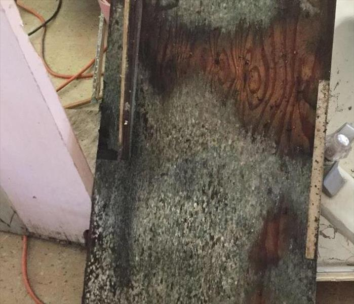 Mold on Kitchen Cabinets